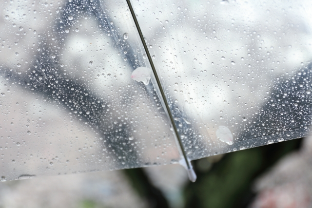 梅雨でチャタテムシが大量発生!汚部屋の悲劇